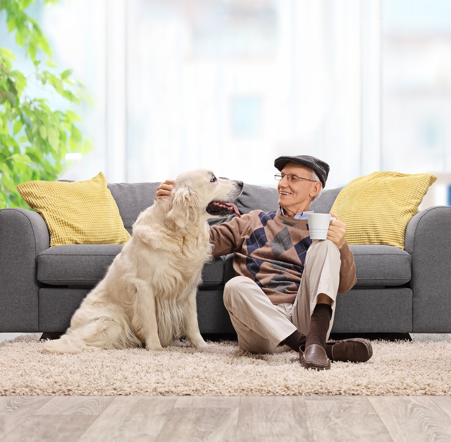 Animal Therapy Benefits for Hospice Care